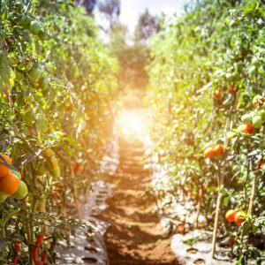 Organic Food's Environmental Benefits