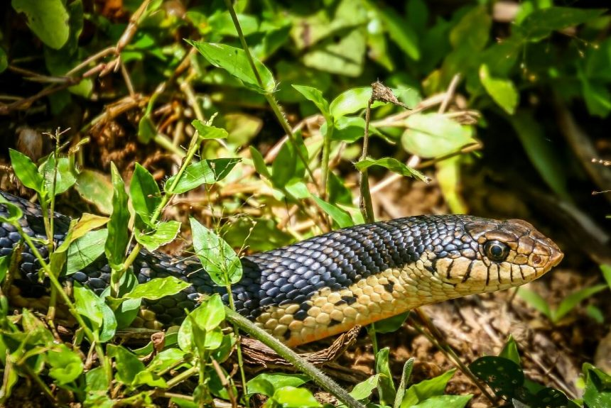 Snakes You Can See on Farms and What You Should About Them