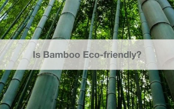 Is Bamboo Eco-friendly?
