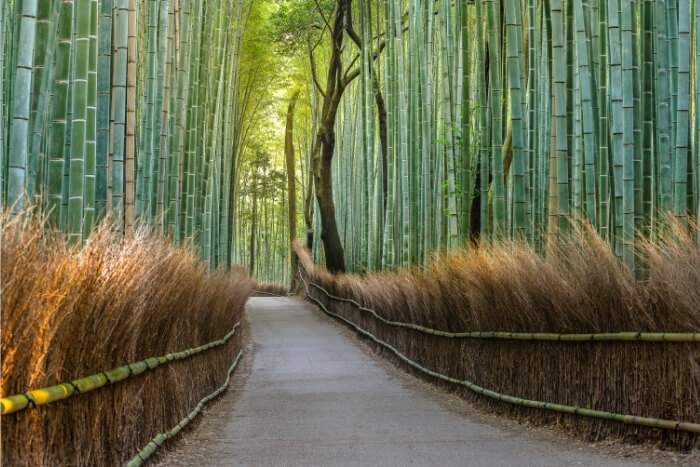 bamboo the fastest growing plant
