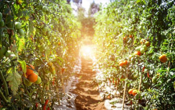 Organic Food's Environmental Benefits