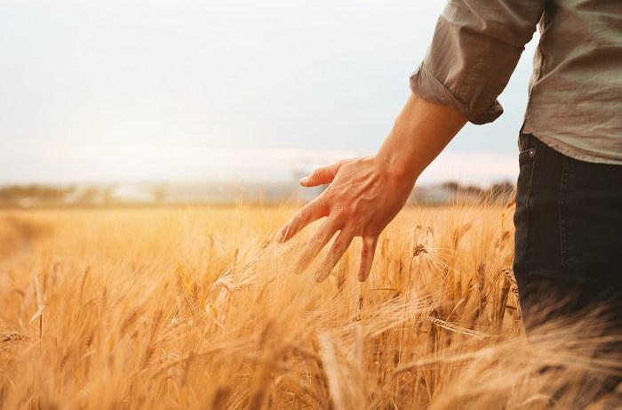 a-farmer-in-the-farm-field